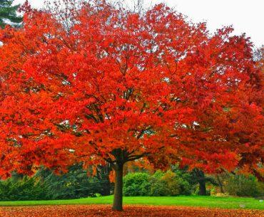 Saint Cloud Parkı - Parc de Saint Cloud