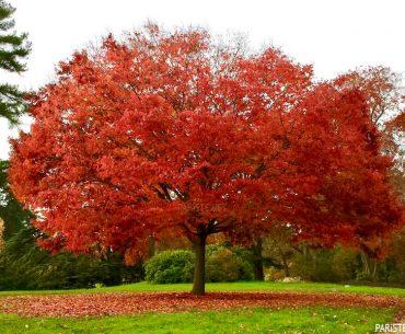 Saint Cloud Parkı - Parc de Saint Cloud Pariste.Net